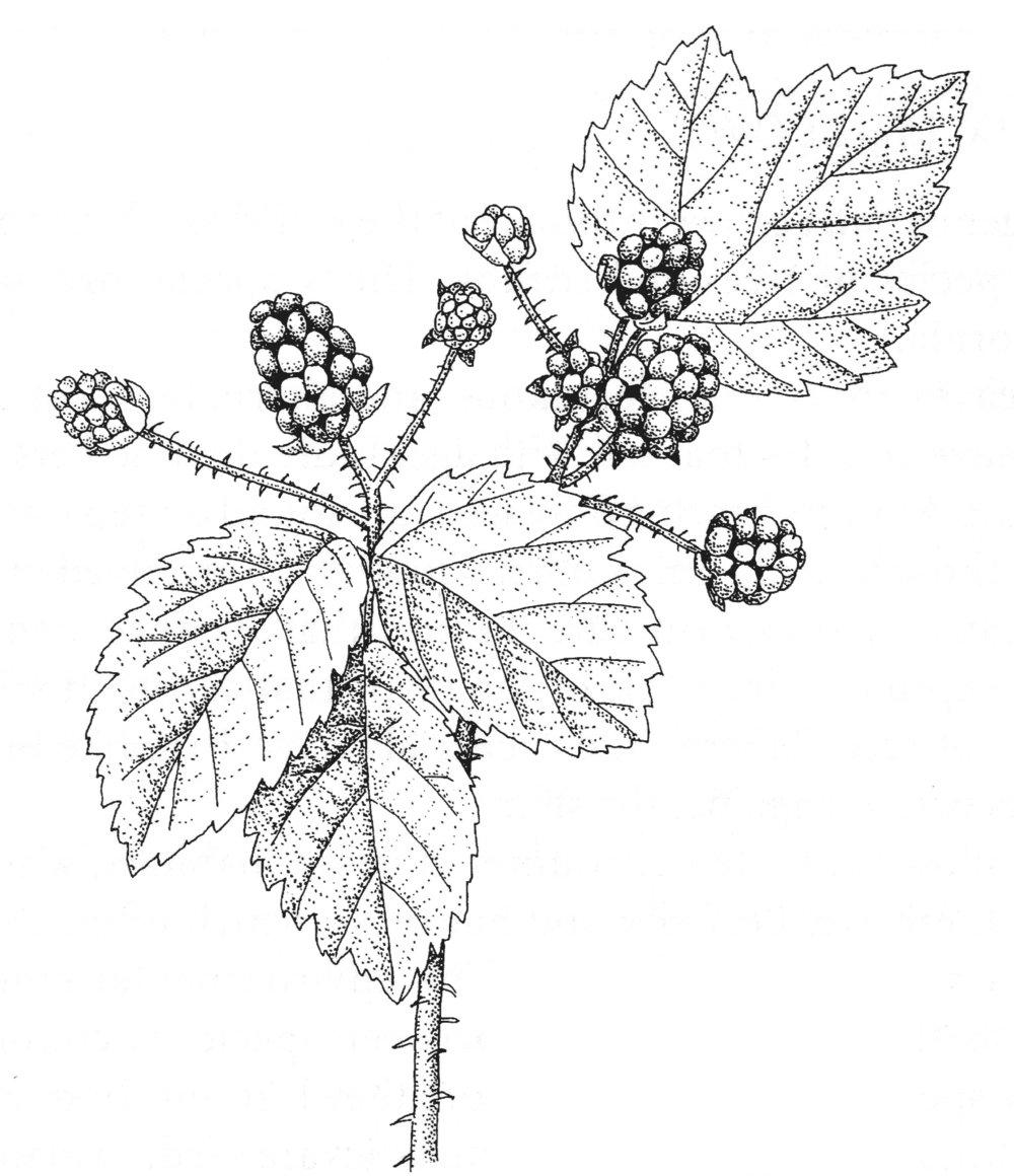 ts-calBlackberry.jpg
