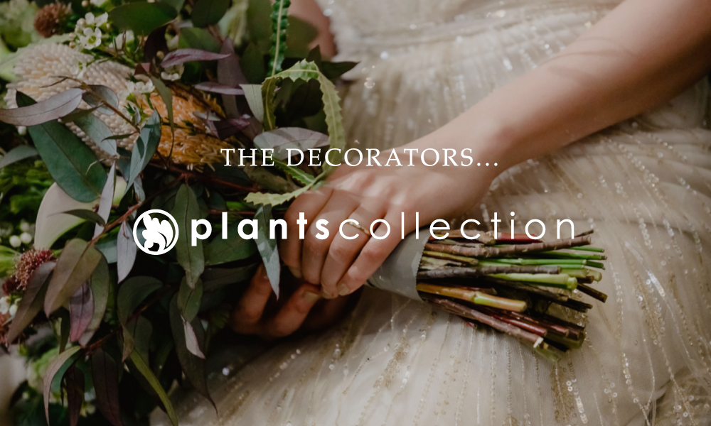 plants_banner_03.jpg