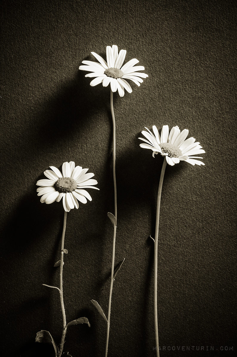 dark-spring-1.jpg