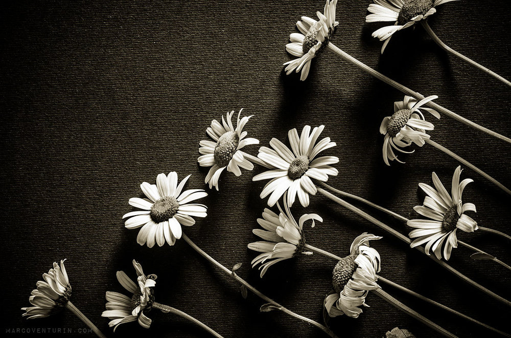 dark-spring-7.jpg