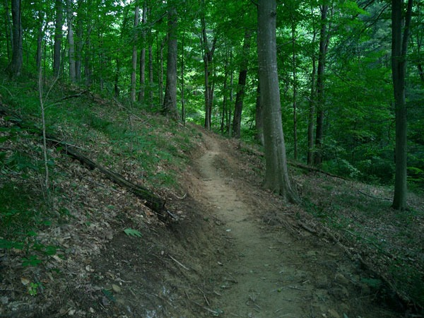 Hoosier National Forest (image - Wikipedia)