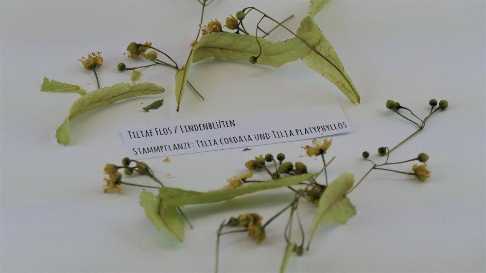 Tiliae flos / Lindenblüten