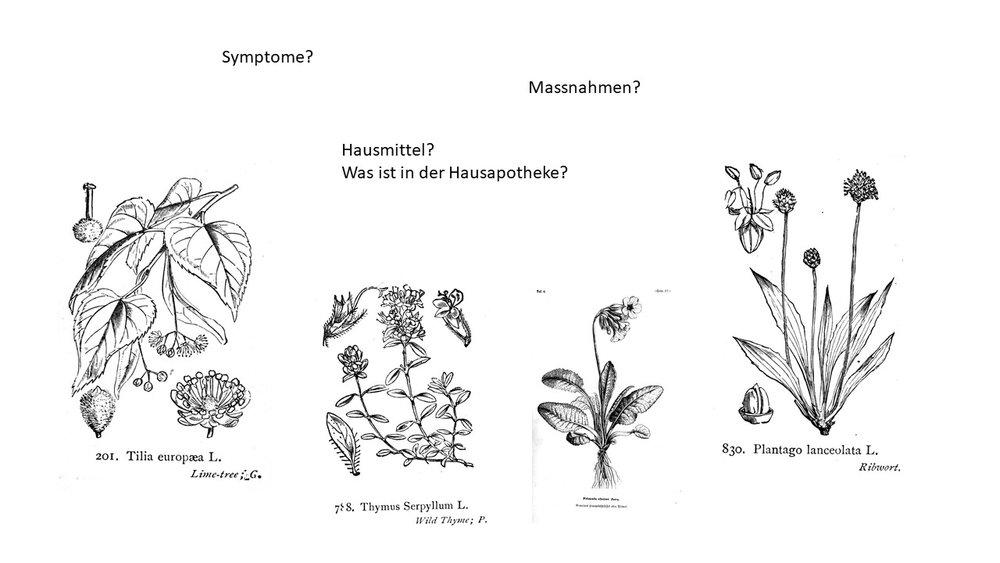 heilpflanzen_gegen_husten.JPG