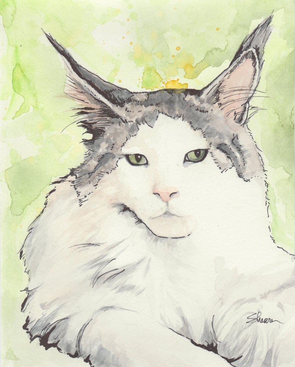 Volker_cat.jpeg