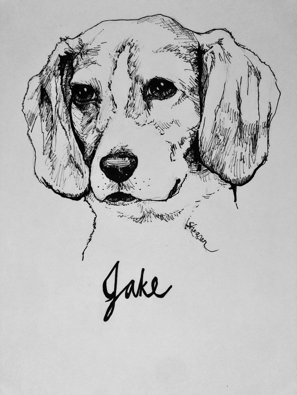 JakeBeagleSketch.jpeg