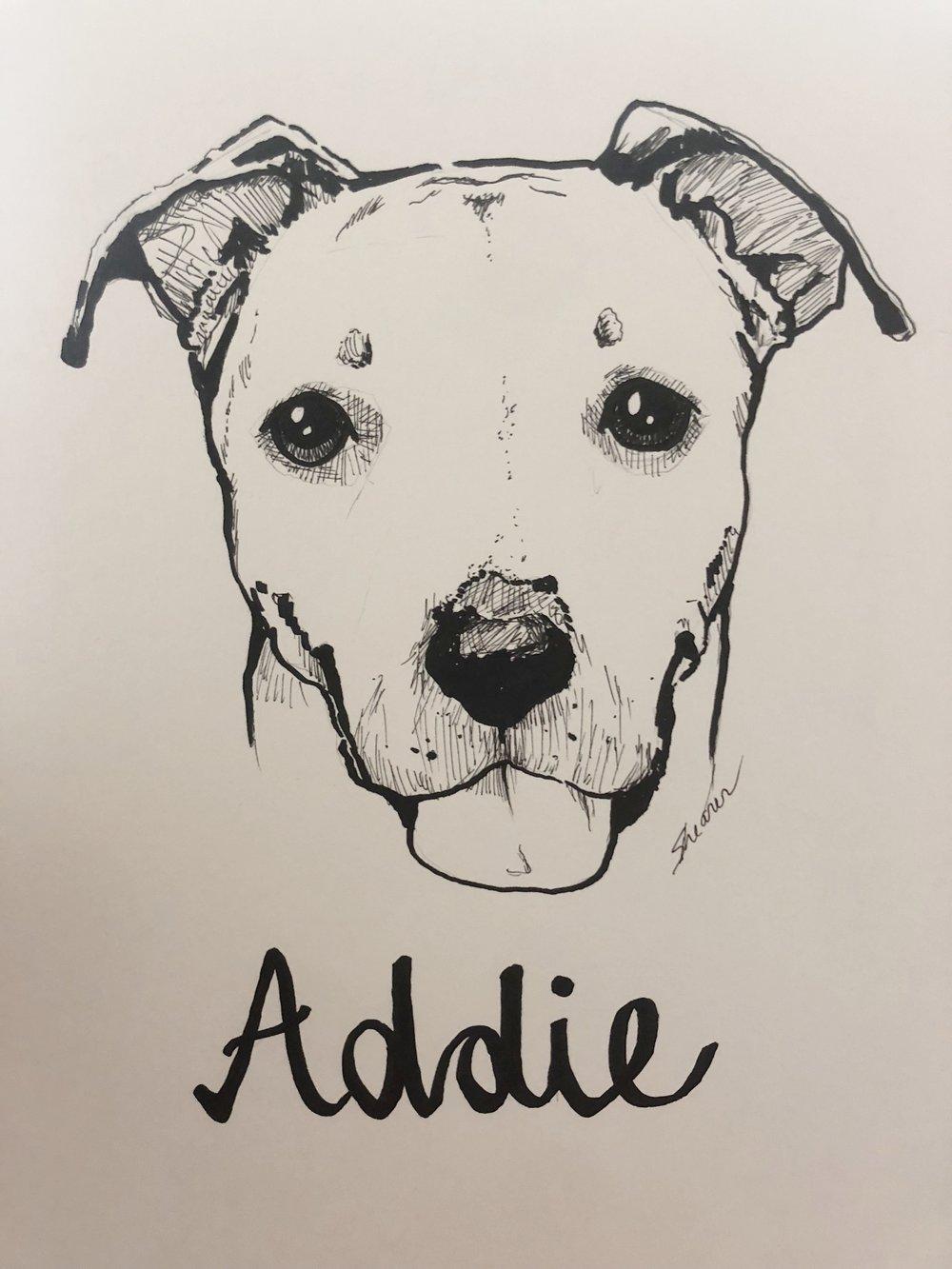 Addie.jpeg