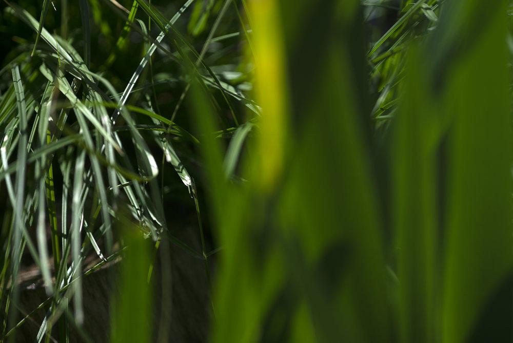 green_green_grass.jpg