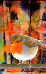 bird-on-fenceweb.jpg