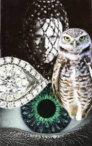 OwlIntuitionweb.jpg