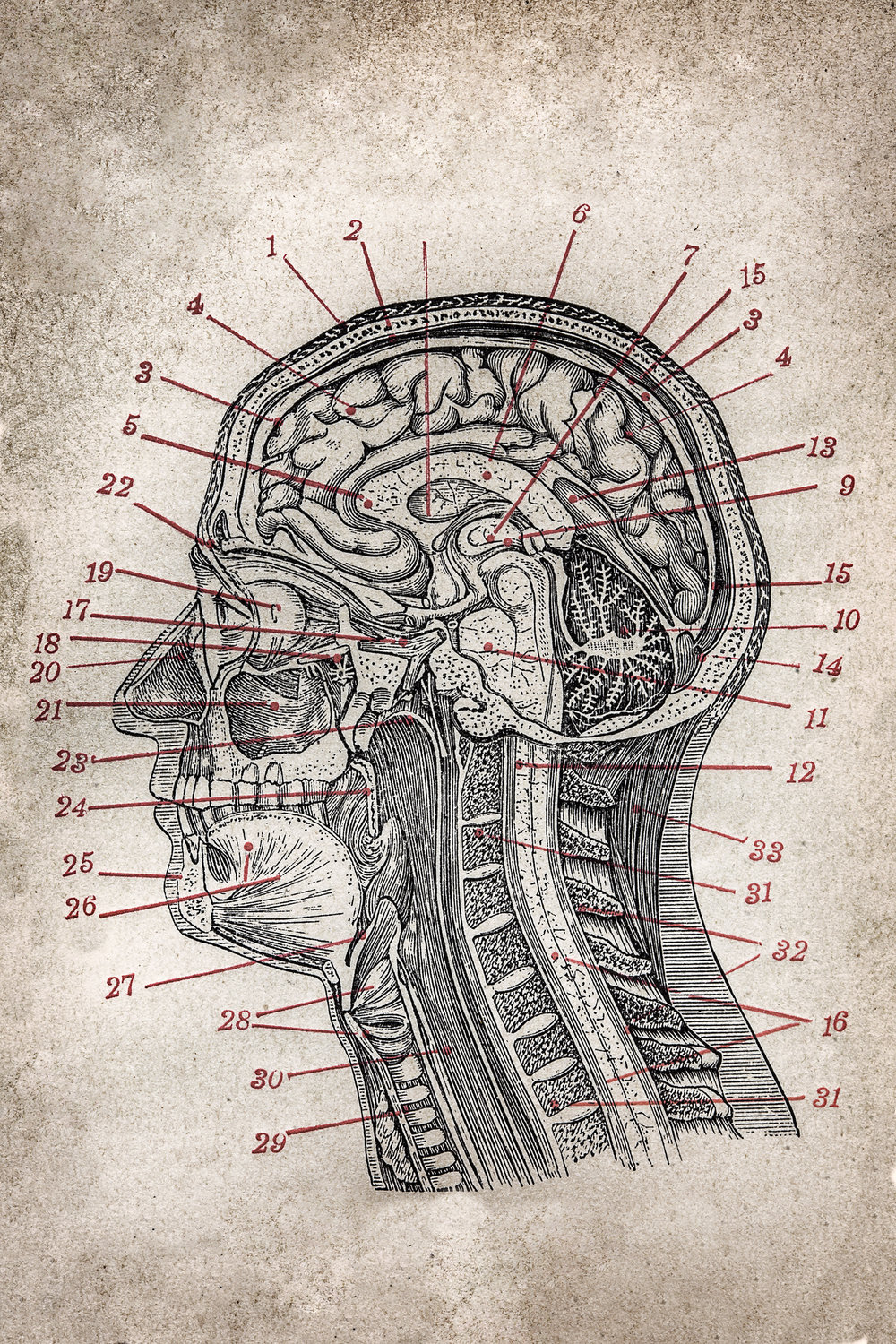 """Thoughts Create Things - In the book, """"The Body Engineer"""", Dr. Sean Woods writes on the power of emotions and how they have the potential to create health or disease depending on which emotion you spend the most time in."""