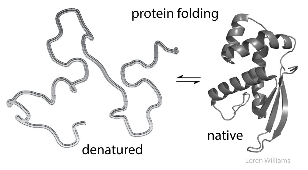 Denatured Proteins in the Body leads to 100's of Problems - Most notable are the nuero-degenerative diseases involving amyloid plaqueing - Alzheimer's, Parkinson's, ALS, and MS