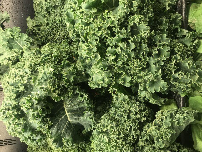 the veggie md