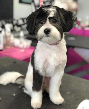 Shampooch Pet Styles
