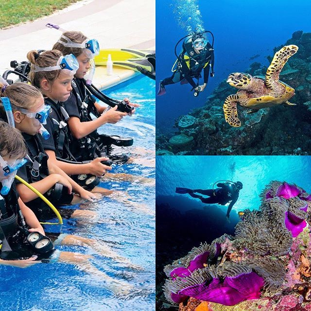 You are never too young to teach your girl to scuba - isn't that right @girlsthatscuba ! @bluesafariseychelles #islandparadise #diving #marineadventure #scubadiving #snorkel #untouched #experiences #conservation #seychelles #paradise @nektonmission