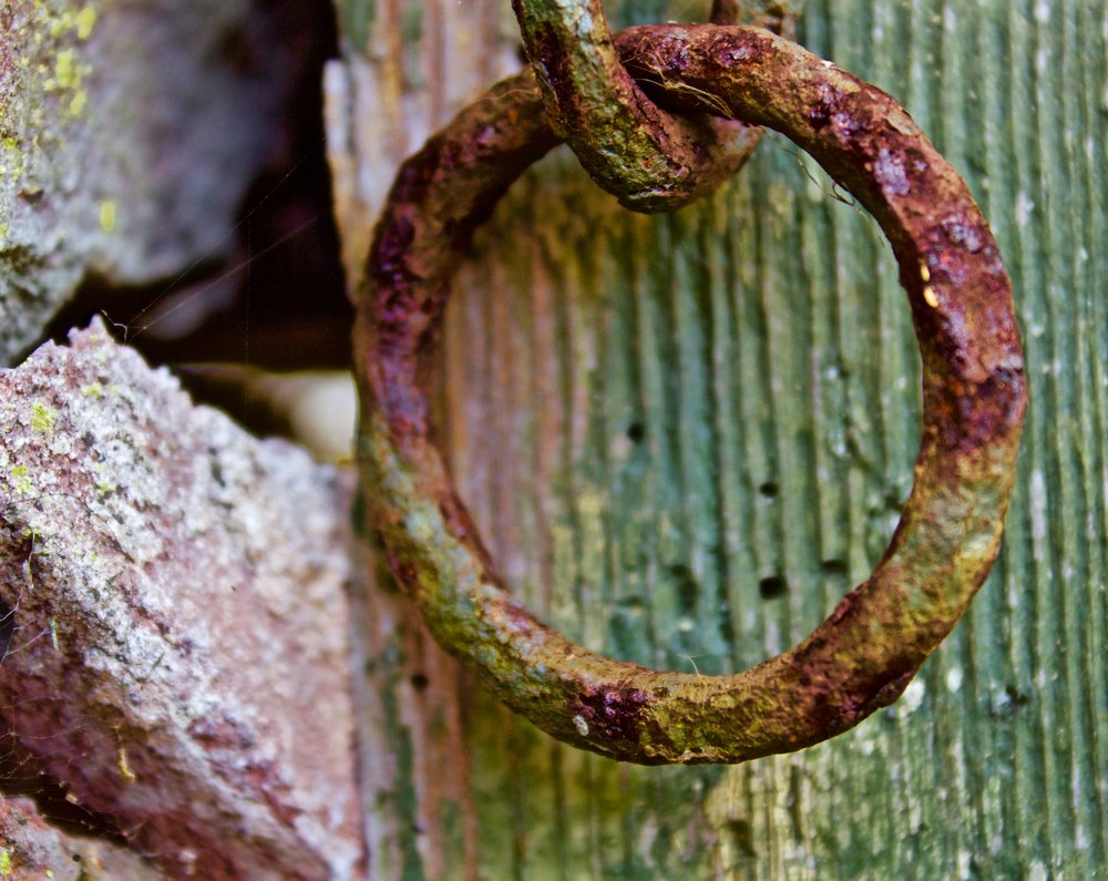 rust 24 ( dawlish, england horizontal).jpg
