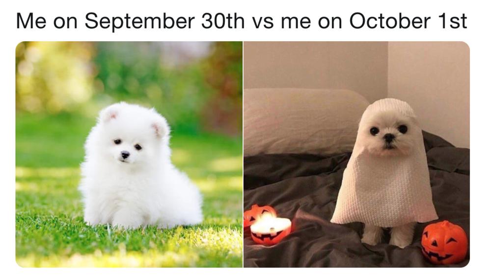 Bonus doggo in the meme!