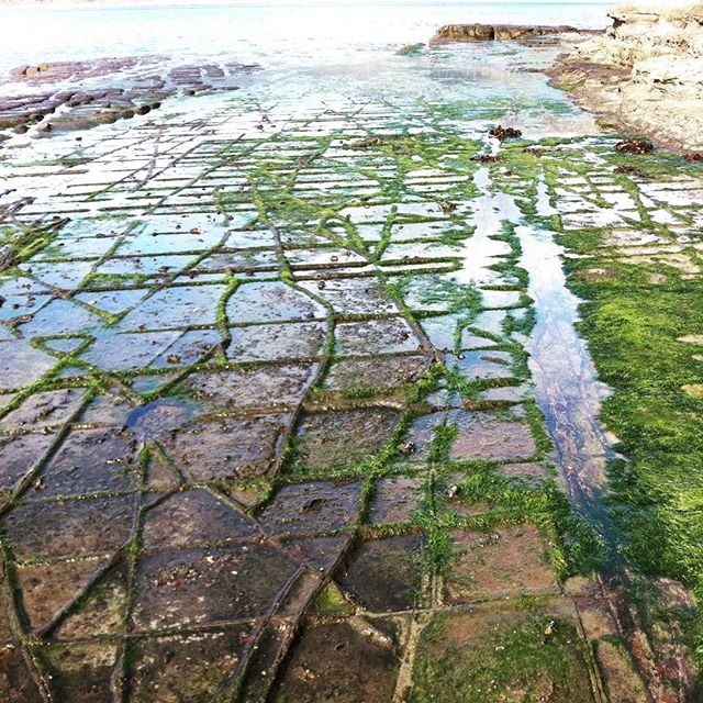 Tessellated pavement rocks. Eaglehawk neck. Tasmania. #camping #cold #nature #geology  #eaglehawkneck #coast #landscape #photography #tasmania #tasmanpeninsula