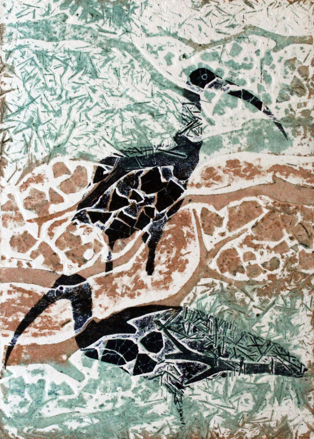 'Straw-necked Ibis'