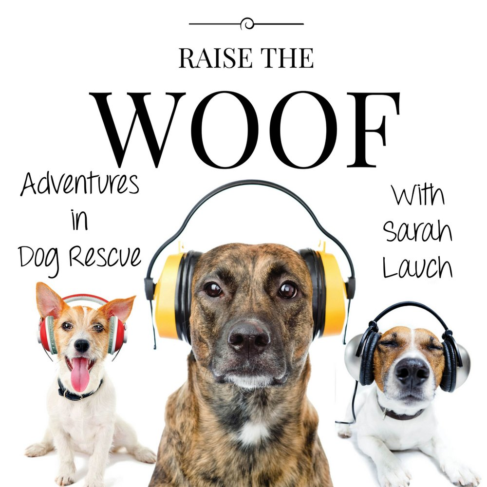 Empawthy Project on the Raise the Woof Podcast - Listen to the live podcast recording that kicked off the Empawthy Project