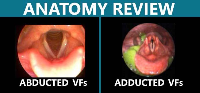 anatomyreview.jpg