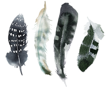 feathers2.jpg