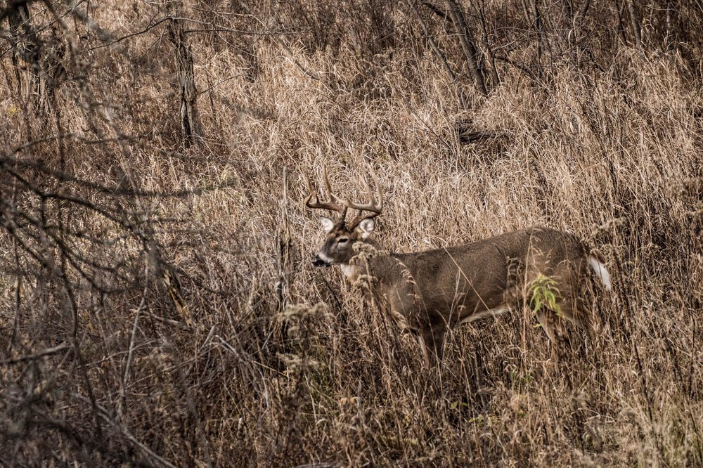 the-breaking-point-whitetail-hunting-show-waypoint-lefty.jpg