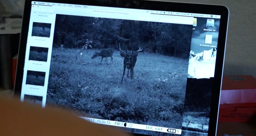 big-arkansas-stag-caught-on-camera-in-daylight-on-struttinbuck-streaming-on-waypoint-shot-3