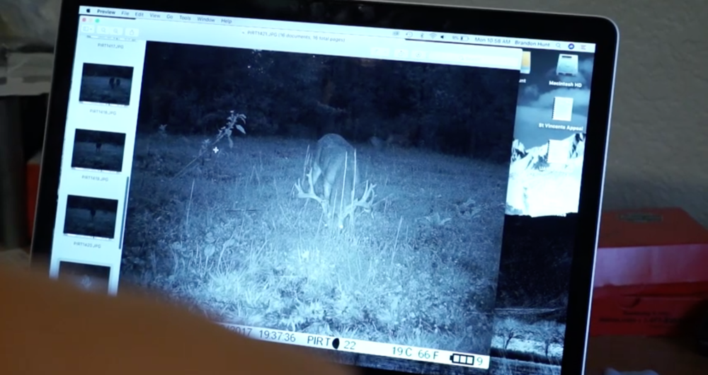 big-arkansas-stag-caught-on-camera-in-daylight-on-struttinbuck-streaming-on-waypoint-shot-5