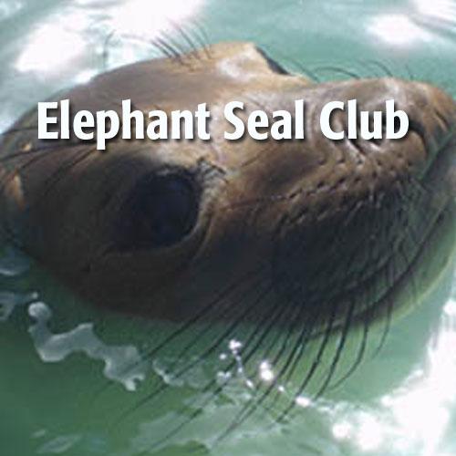 elephant-seal-club.jpeg