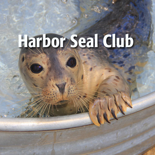 harbor-seal-club.jpeg