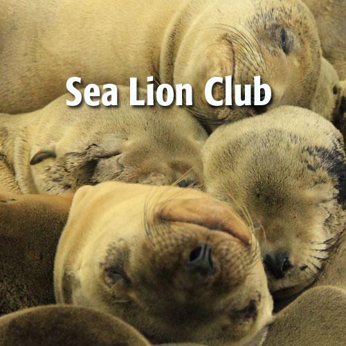 sea-lion-club.jpeg