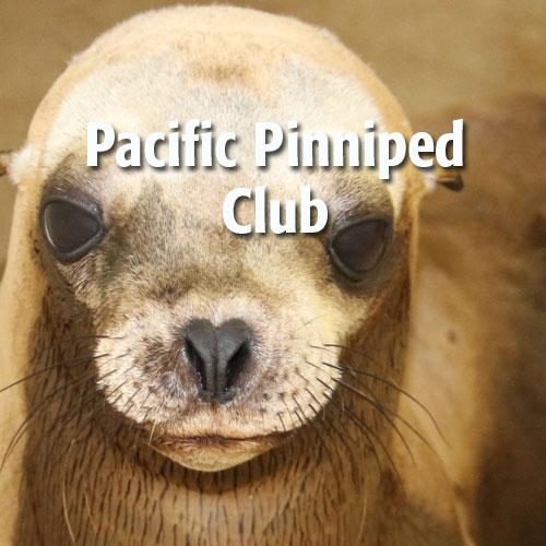 pacific-pinniped-club.jpeg