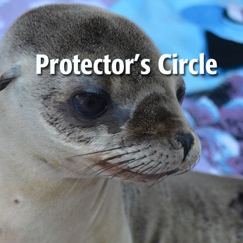 protectors-circle.jpeg