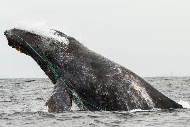 Whale+article.jpg