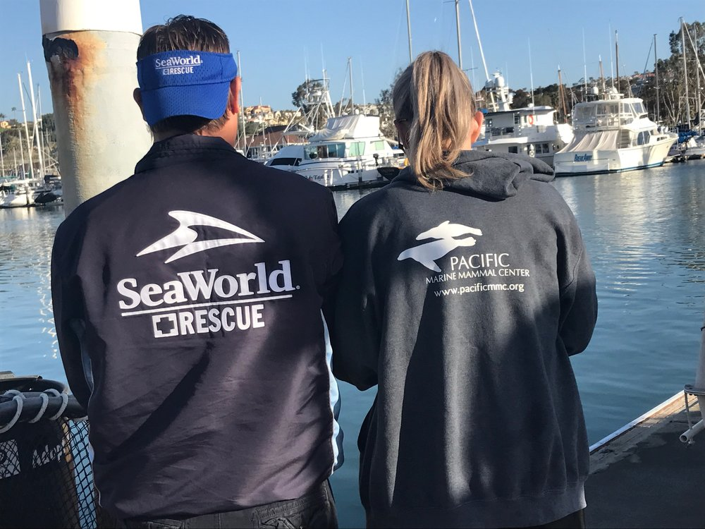 Sea World Rescue