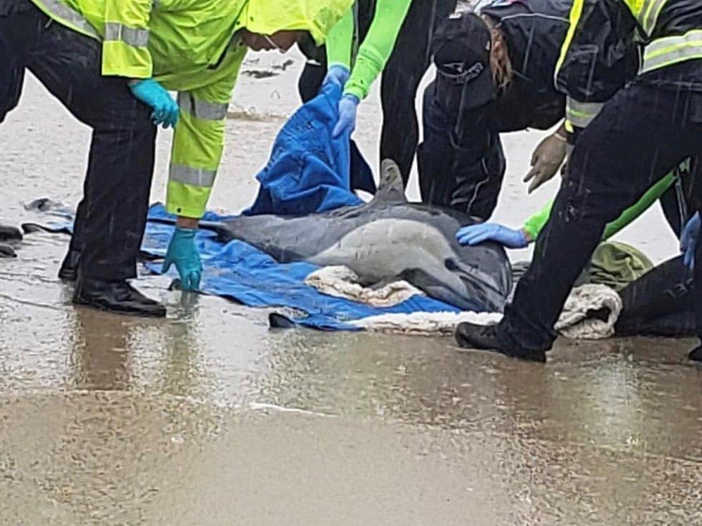 Dolphins+%281%29.jpg