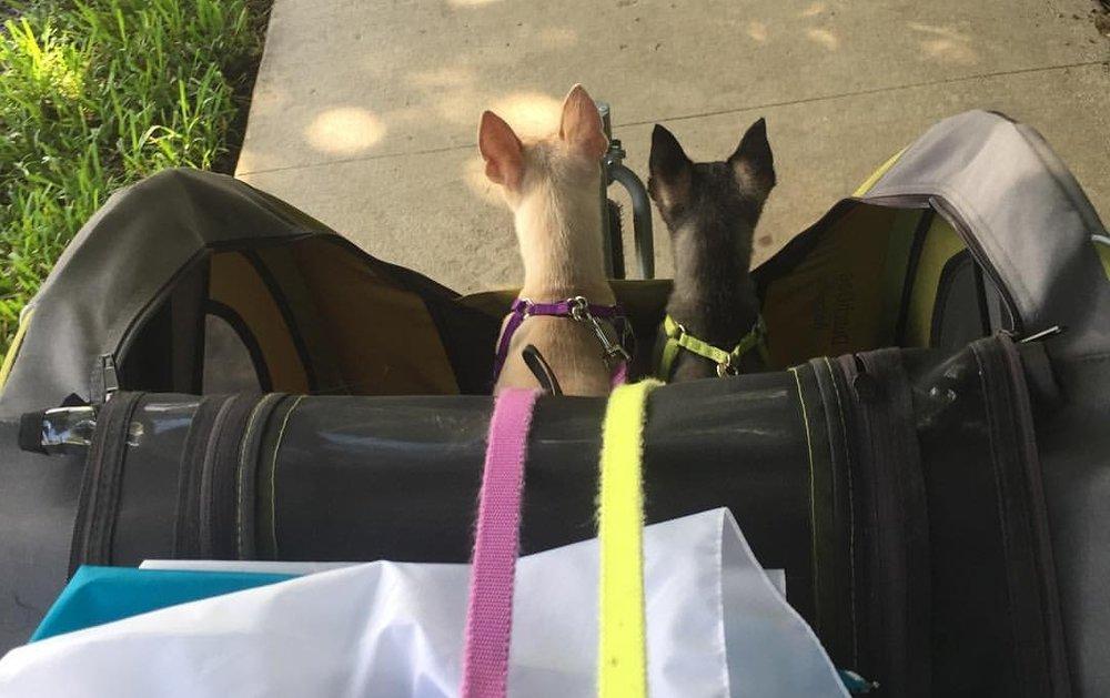 Doggy Walks / Kitty Care -