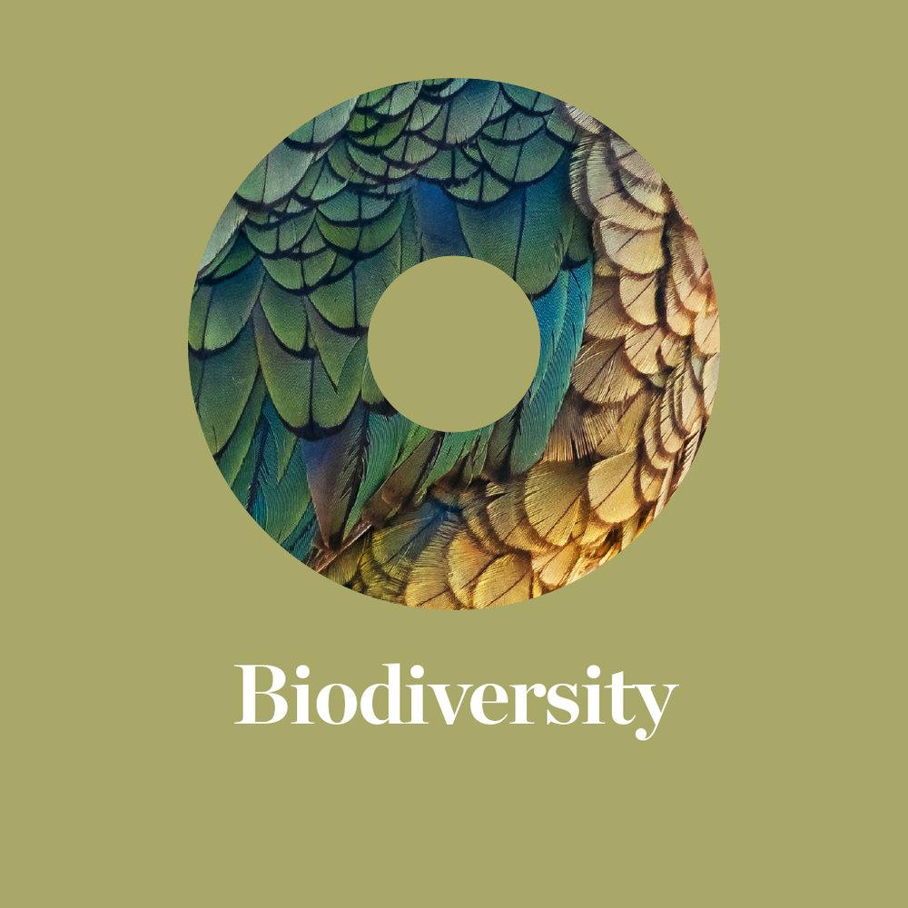 Thumb-Biodiversity.jpg