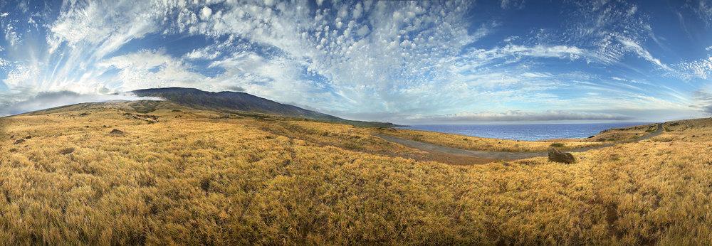 Maui Grass