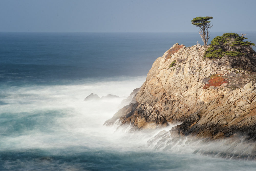 Point Lobos cypress pinnacle.jpg