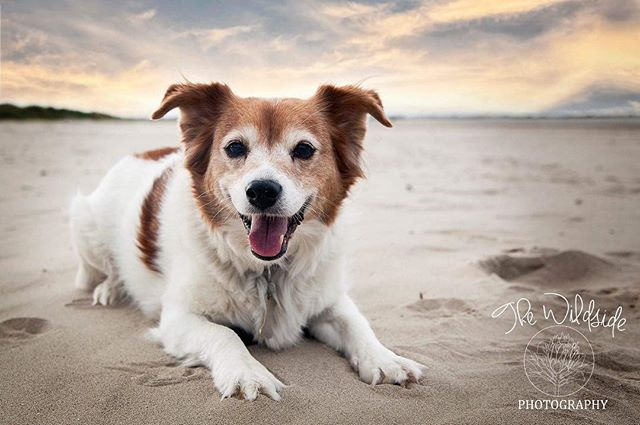 So this is my beautiful girl Molly!! She's 11 now but still acts like a puppy 😂 she was very well behaved at the beach, not so much in the car :P • I really believe in capturing beautiful and natural images of pets to be made into artwork for the home! They're part of the family and should be displayed, especially since they don't stay with us forever! I've already had this made into a photo block for my bedroom but contemplating getting something a bit bigger for the wall! • All my wall art is made locally and I love the sense of community that comes with that! #localbusinesses #supportsmallbusiness #thisismine
