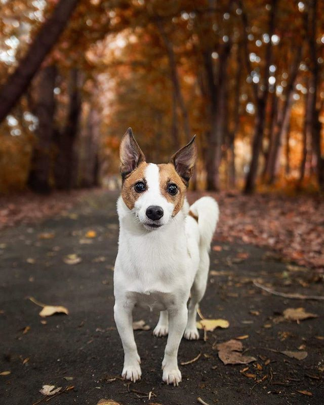 I'm sad summer is over but I really do love Autumn! The gorgeous colours and the cold,  sunny mornings! It was great getting out recently with @dogonthetoon and trying out some autumnal pictures! Charlie was such a good boy while I tried to get this picture 😂 #feelgoodfriday #autumn #dogphotography