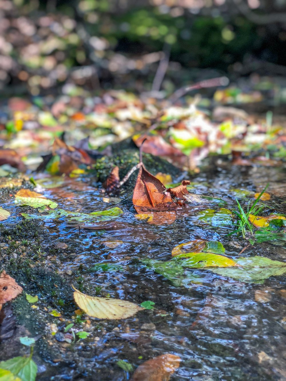 Fall Leaves in the Stream