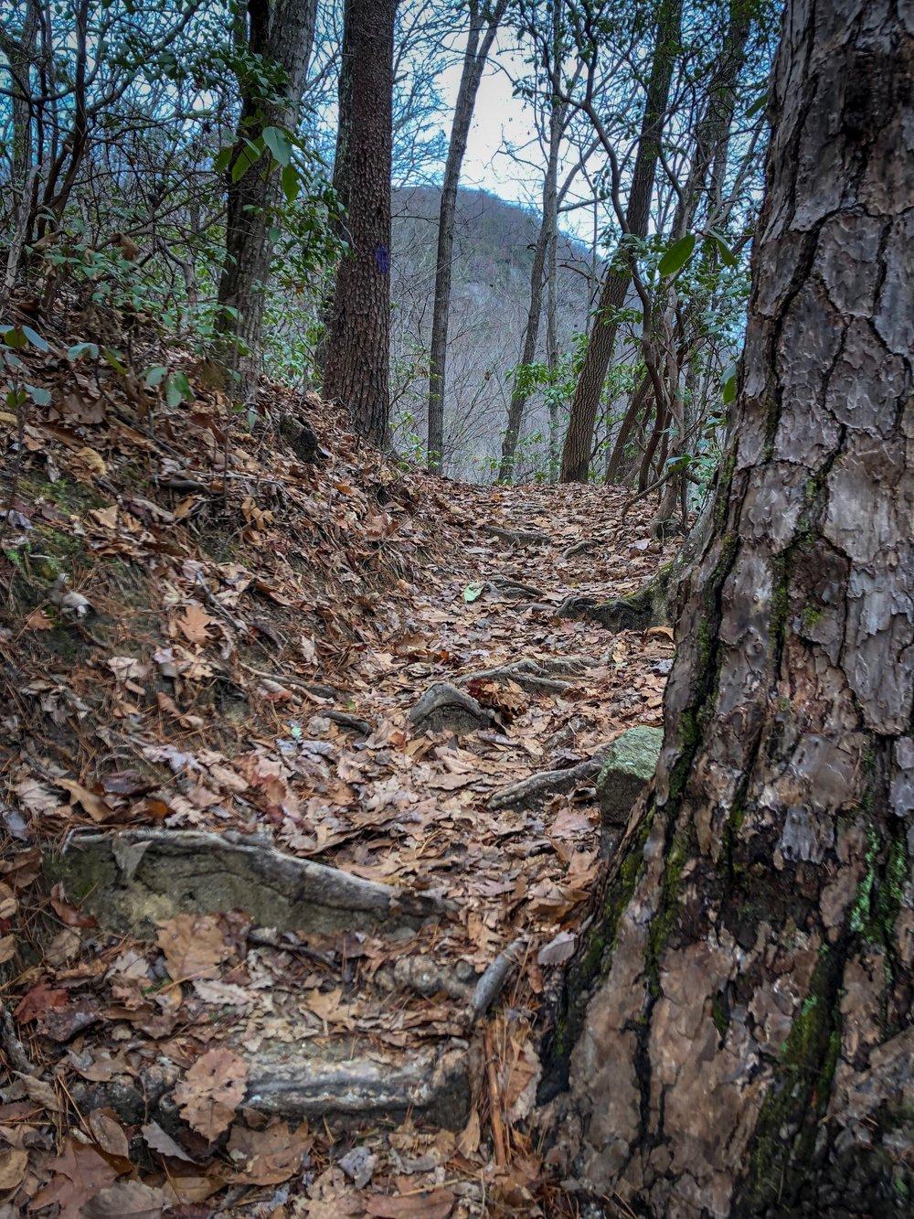 Falls Creek_Trail with Views.JPG