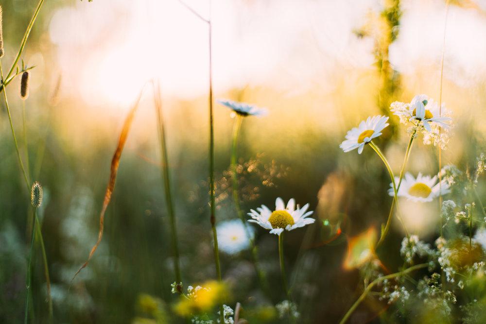 Sunlight on flowers in a field