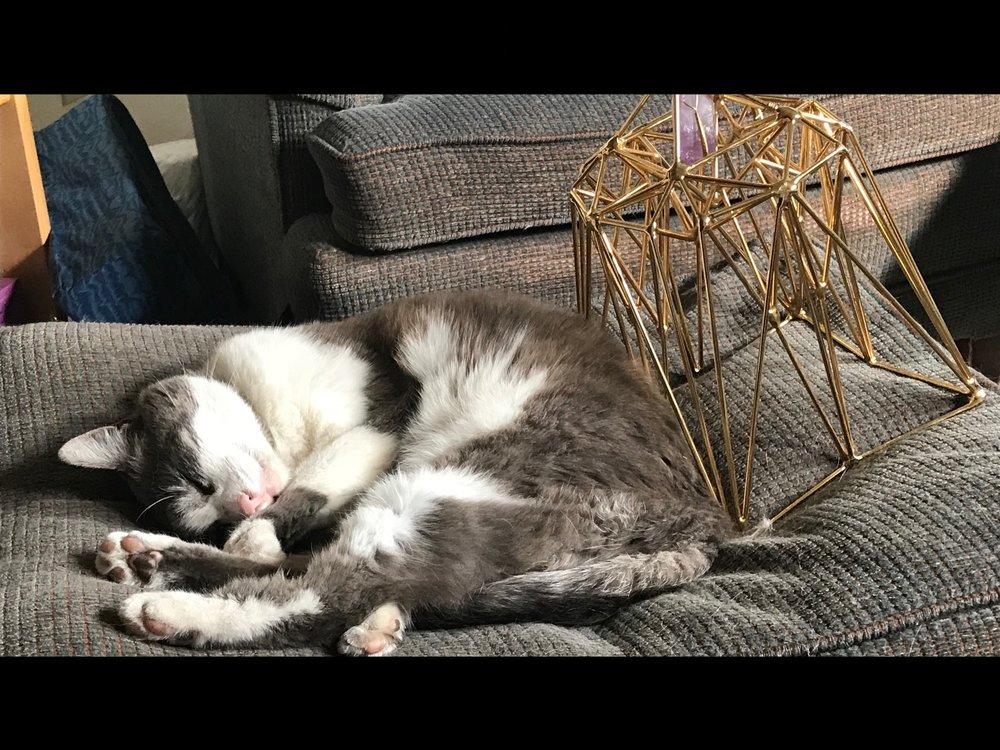 T-bien napping Stargate.jpg