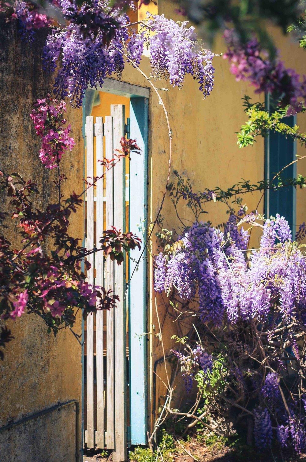 wisteria small.jpg