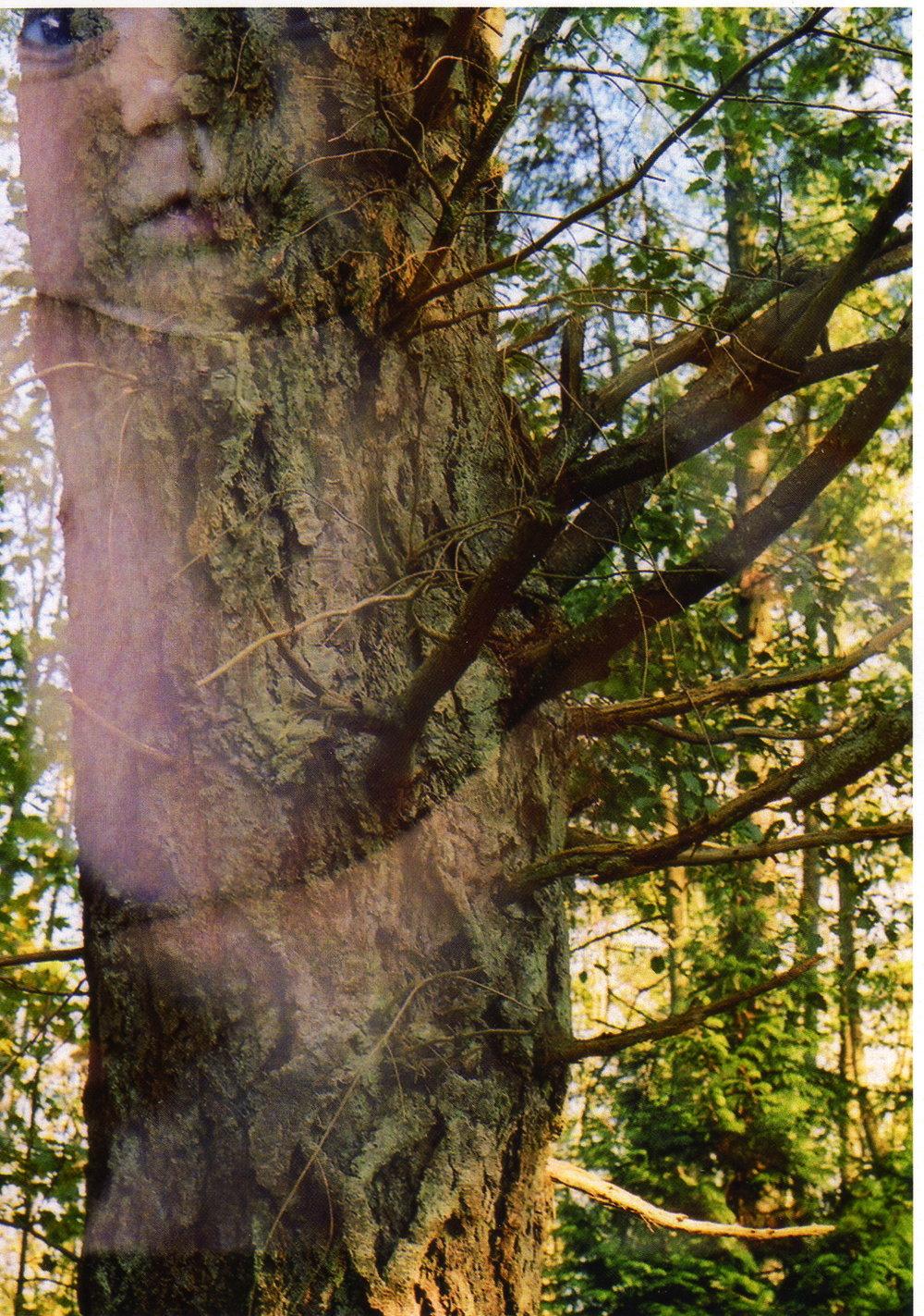 TreeBaby0003.jpg