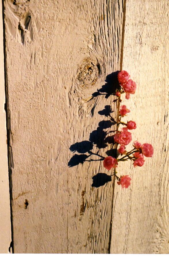 Peaking Flowers.jpg