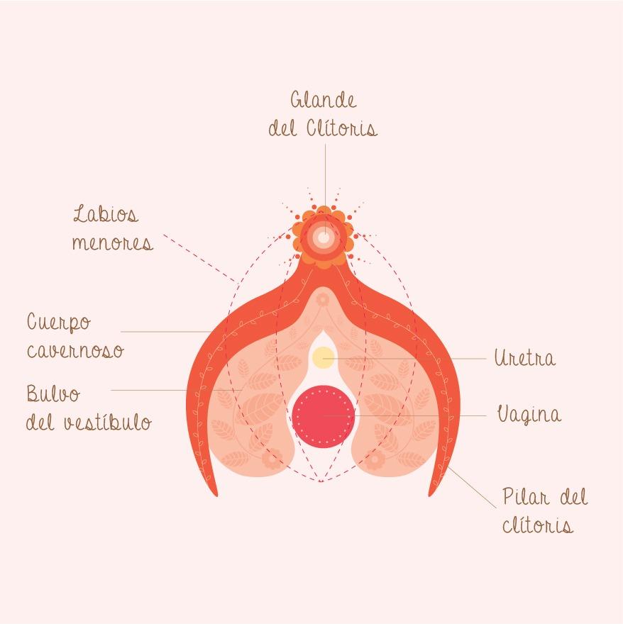 Perder sensibilidad en el glande